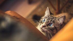 iubire-fata-de-pisici